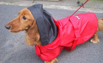 New Trends in Clothes for Dogs